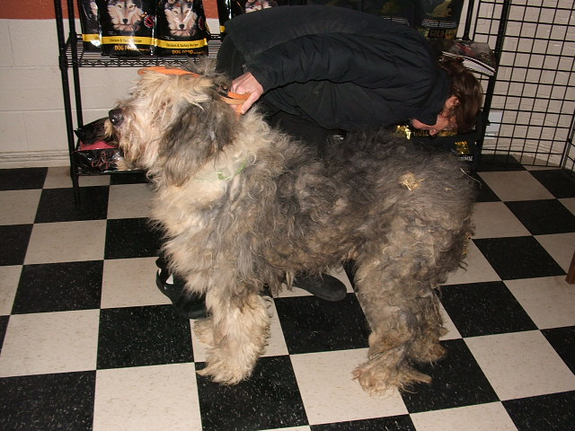 Rescued Dogs Old English Sheepdog Stories